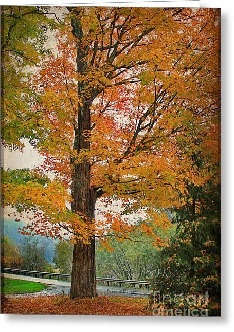 Fir Trees Greeting Cards - The Fay Tree Greeting Card by Deborah Benoit