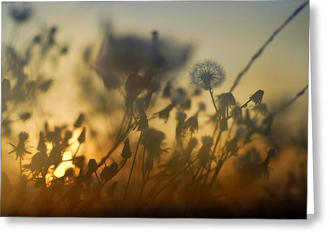 Horizontal Abstract Landscape Greeting Cards - The fire of the sun Greeting Card by Guido Montanes Castillo