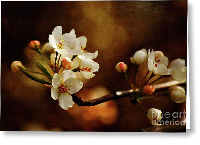Pink Blossoms Digital Art Greeting Cards - The Fleeting Sweetness of Spring Greeting Card by Lois Bryan