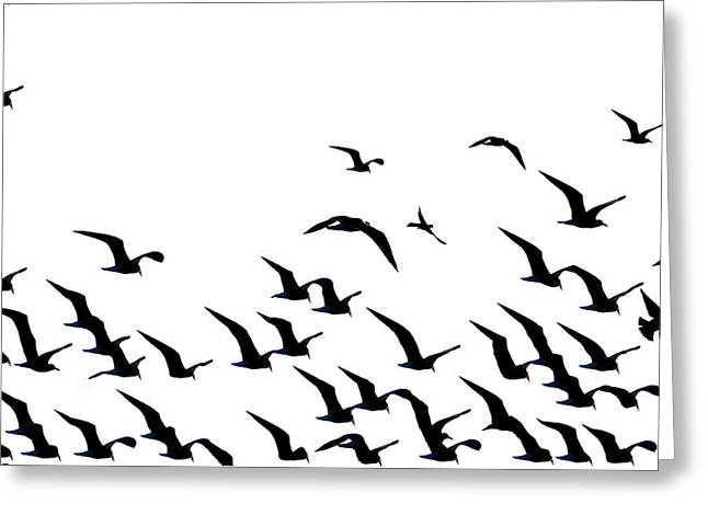 Flying Seagull Greeting Cards - The Flock Greeting Card by Bill Cannon