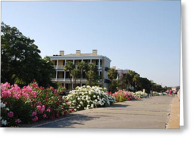 Best Sellers -  - Southern Lifestile Greeting Cards - The flowers at the Battery Charleston SC Greeting Card by Susanne Van Hulst