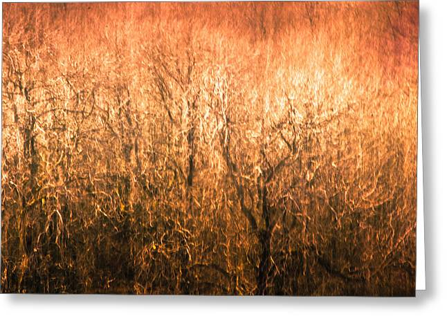 Fire Wood Greeting Cards - The Forest Fire Greeting Card by Justin Albrecht