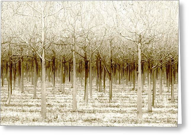 Forests Greeting Cards - The Forest for the Trees Greeting Card by Holly Kempe