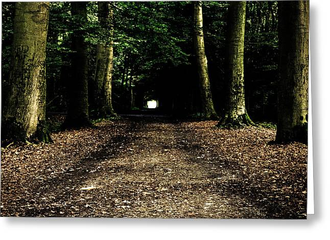 Tunnels Greeting Cards - The Forest Tunnel Greeting Card by Justin Albrecht