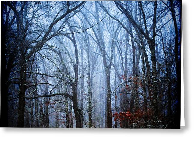 Decor Photography Greeting Cards - The Forests Cathedral Greeting Card by Katya Horner