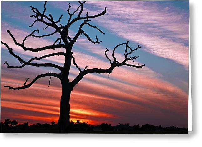 Sunset Over The Village Greeting Cards - The Formerly Live Oak at Sunset Greeting Card by Betty Eich