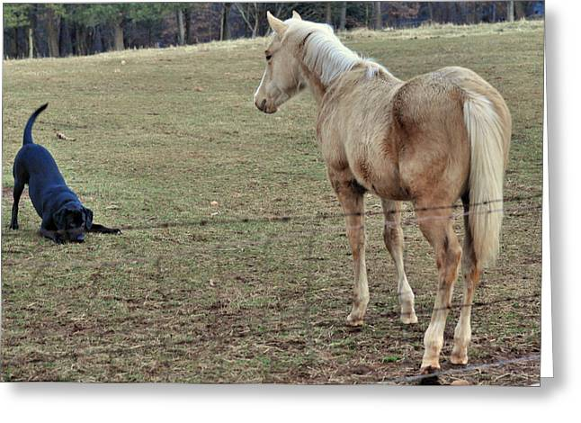 Equine Greeting Cards - The Game is Afoot - d4031b Greeting Card by Paul Lyndon Phillips