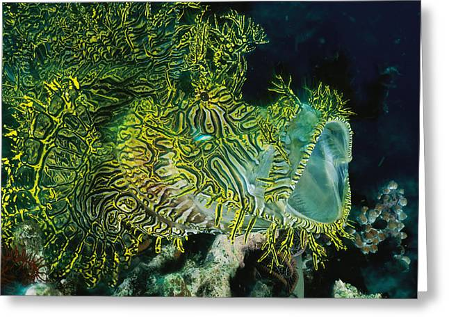 National Geographic - Greeting Cards - The Gaping Mouth Of A Merlets Scorpion Greeting Card by David Doubilet