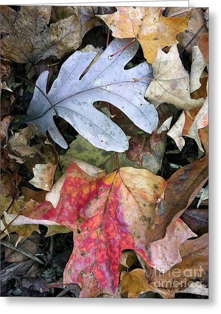 Foliage Photographs Greeting Cards - The Gathering Greeting Card by Trish Hale