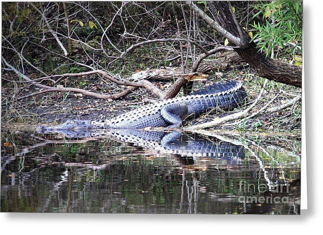 The Gator That Lives Under The Bridge Greeting Card by Carol Groenen