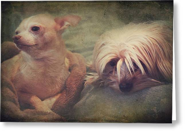 Companion Digital Art Greeting Cards - The Girls Greeting Card by Laurie Search