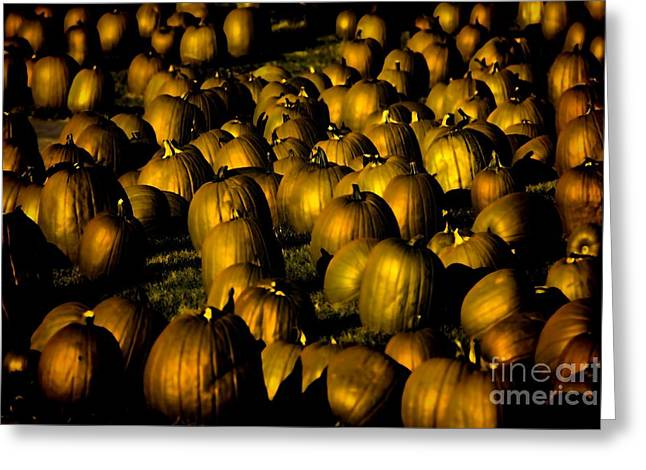 North Fork Digital Greeting Cards - The Golden Pumpkin Patch Greeting Card by Vickie Emms