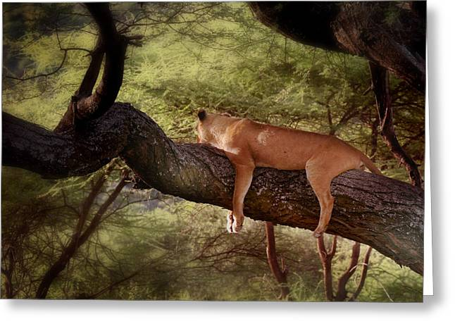 Serengeti Lioness Greeting Cards - The good life Greeting Card by Joseph G Holland