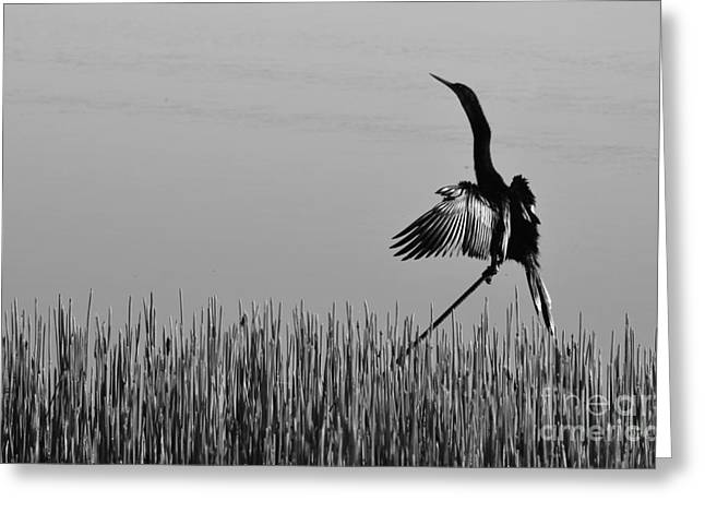 Double-crested Cormorant Greeting Cards - The Good Life Monochrome Greeting Card by Melanie Moraga