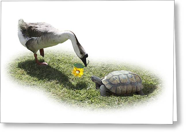Bff Greeting Cards - The Goose and the Turtle Greeting Card by Gravityx Designs