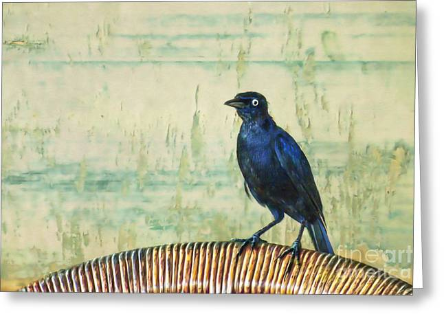 Passerine Greeting Cards - The Grackle Greeting Card by John Edwards