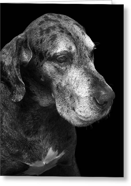 Dog Photographs Greeting Cards - The Great Dane Greeting Card by Marc Huebner