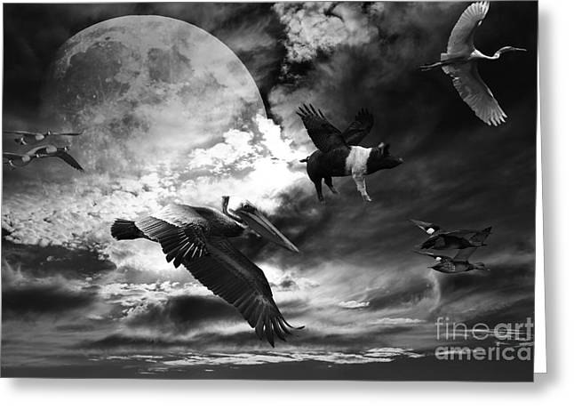 Pig Photos Greeting Cards - The Great Migration . Black and White Greeting Card by Wingsdomain Art and Photography