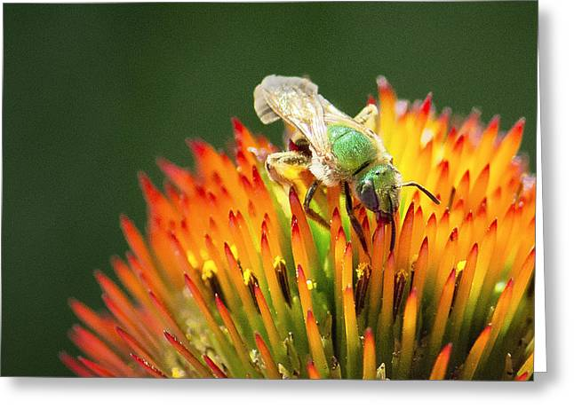 Green Hornets Greeting Cards - The Green Hornet Greeting Card by Vicki Jauron