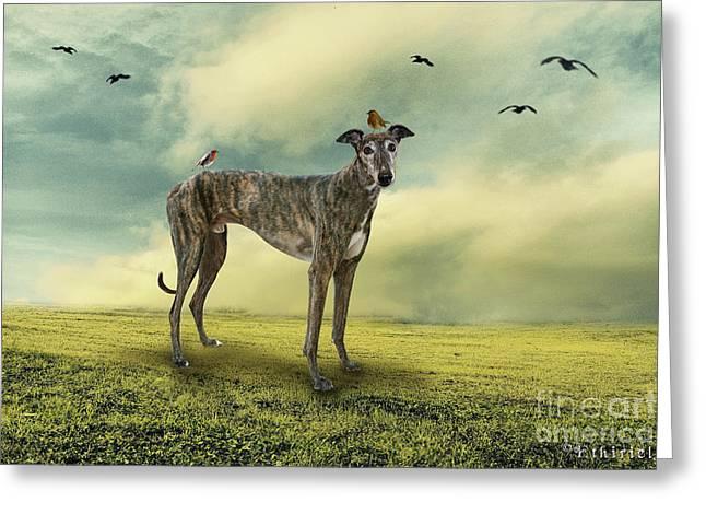 Greyhound Dog Greeting Cards - The Greyhound Greeting Card by Ethiriel  Photography