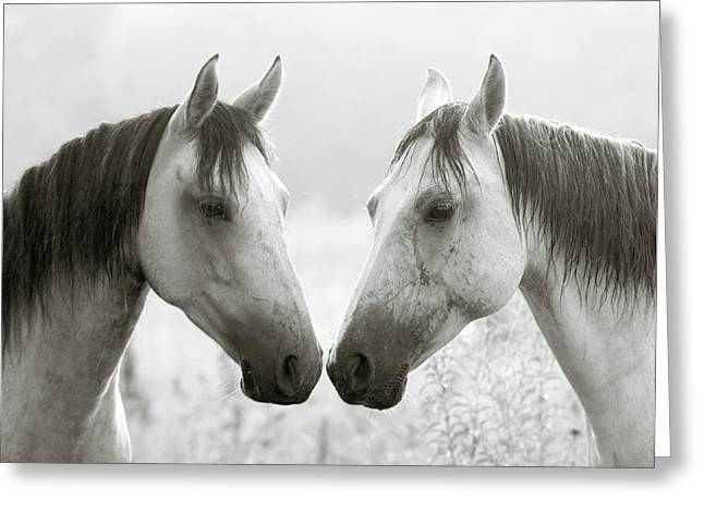Ron Mcginnis Greeting Cards - The Greys Greeting Card by Ron  McGinnis