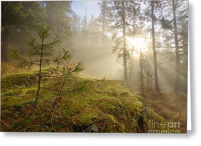Sun And Tree Greeting Cards - The Guardians Greeting Card by Idaho Scenic Images Linda Lantzy