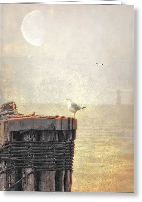 Seascape Images Greeting Cards - The Gull On The Groyne Greeting Card by Tom York Images