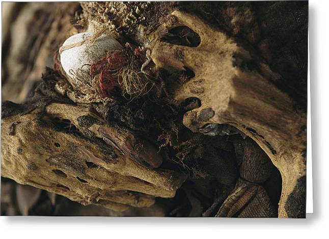 Ethnic And Tribal Peoples Greeting Cards - The Hands Of A Mummy Exhumed Greeting Card by Ira Block