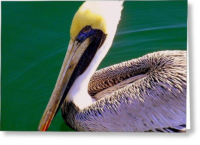 Sea Birds Greeting Cards - The Happy Pelican Greeting Card by Karen Wiles