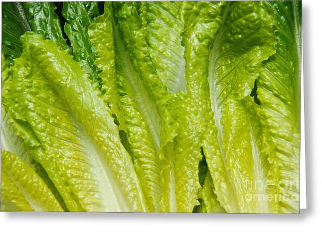 Lettuce Greeting Cards - The Heart Of Romaine Greeting Card by Andee Design