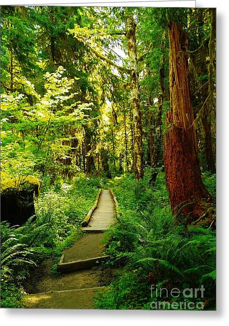 Moss Green Greeting Cards - The Hoh Rainforest   Greeting Card by Jeff  Swan