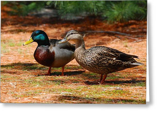Mallard Greeting Cards - The Honeymooners - Mallard Ducks  Greeting Card by Angie Tirado