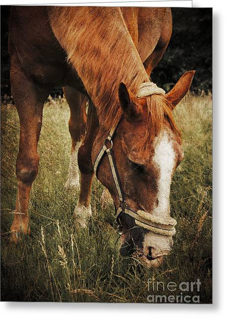 The Horse Greeting Card by Angela Doelling AD DESIGN Photo and PhotoArt