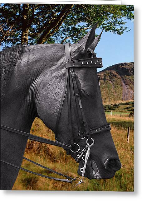 Domestic Greeting Cards - The horse - Gods gift to man Greeting Card by Christine Till
