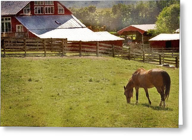 Barn Yard Greeting Cards - The Horse In The Barn Yard Greeting Card by Kathy Jennings