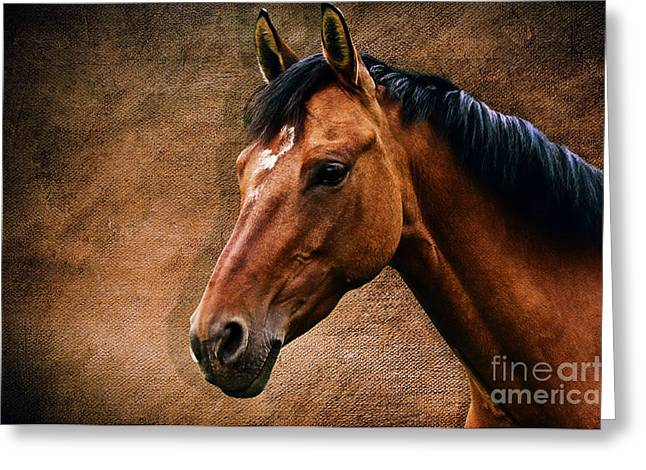Precious Stone Greeting Cards - The horse portrait Greeting Card by Angela Doelling AD DESIGN Photo and PhotoArt