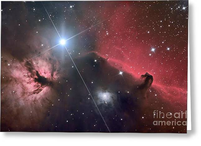 Horsehead Greeting Cards - The Horsehead Nebula Greeting Card by Roth Ritter