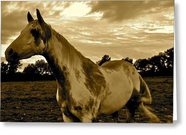 The Horse Greeting Cards - The Horses-Gallant Greeting Card by Tammy Olson