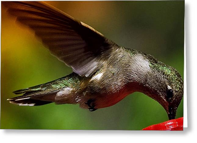 Rufus Greeting Cards - The Hummer Greeting Card by David Patterson