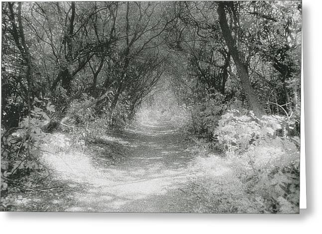 Photos Of Trees Greeting Cards - The Icknield Way Greeting Card by Simon Marsden