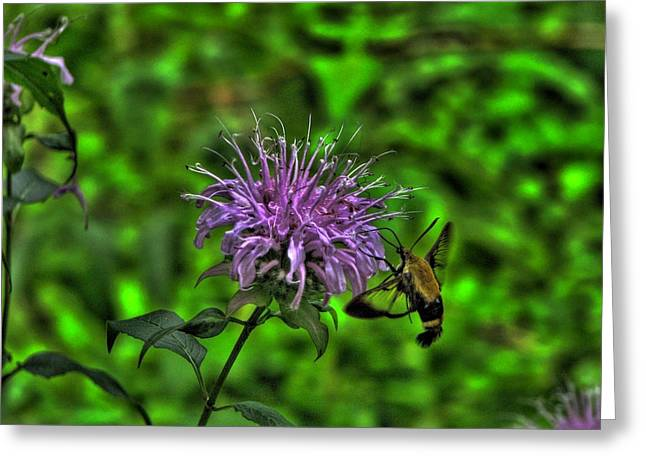Horsemint Greeting Cards - The Imposter Greeting Card by William Fields