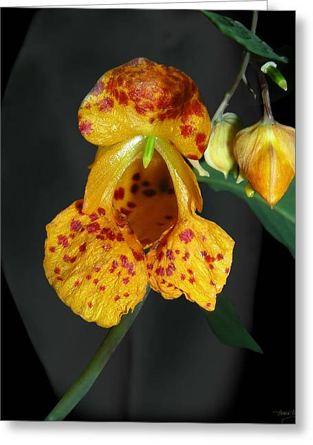 Floral Digital Art Digital Art Greeting Cards - The Inspiration Greeting Card by Torie Tiffany