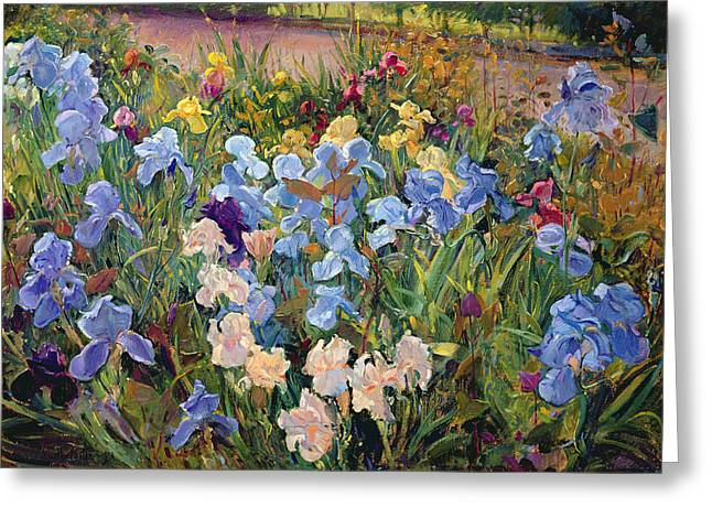 Flower Bed Greeting Cards - The Iris Bed Greeting Card by Timothy Easton