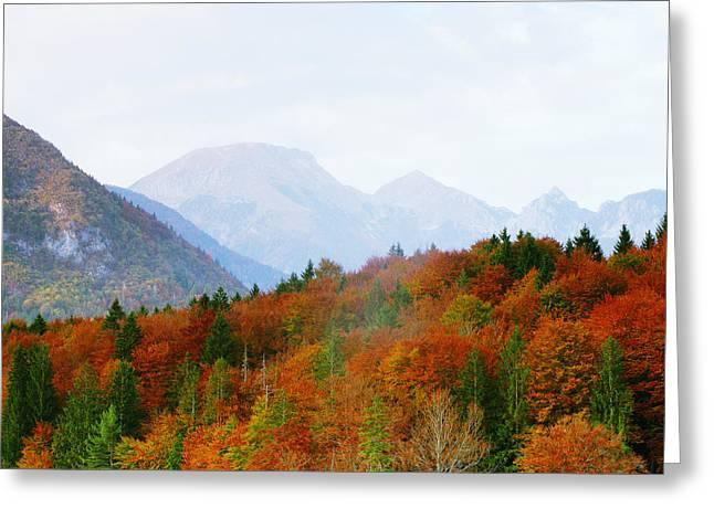 Bohinj Lake Greeting Cards - The Julian Alps in Autumn at Lake Bohinj Greeting Card by Greg Matchick