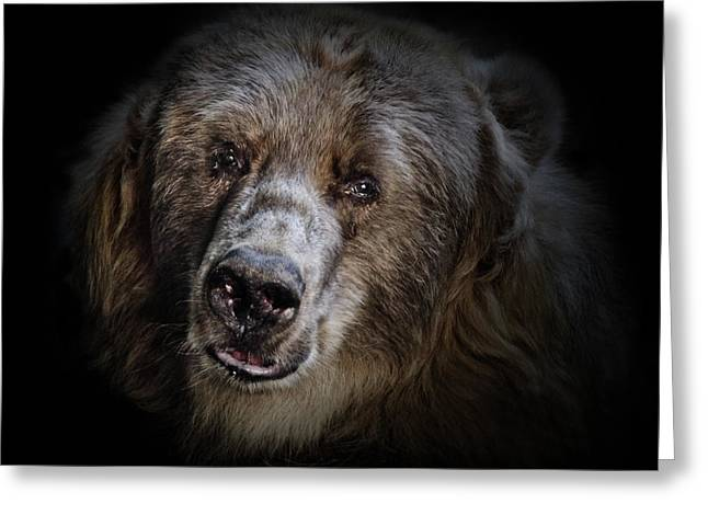 The Kodiak Bear Greeting Card by Animus Photography