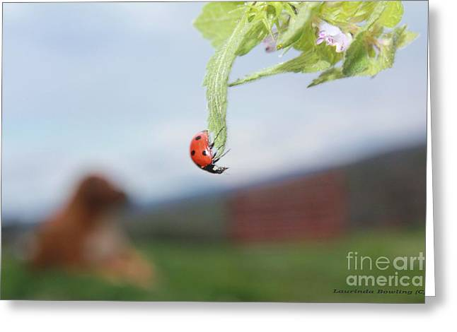 Southwest Gate Print Greeting Cards - The Lady Bug No.1 Greeting Card by Laurinda Bowling