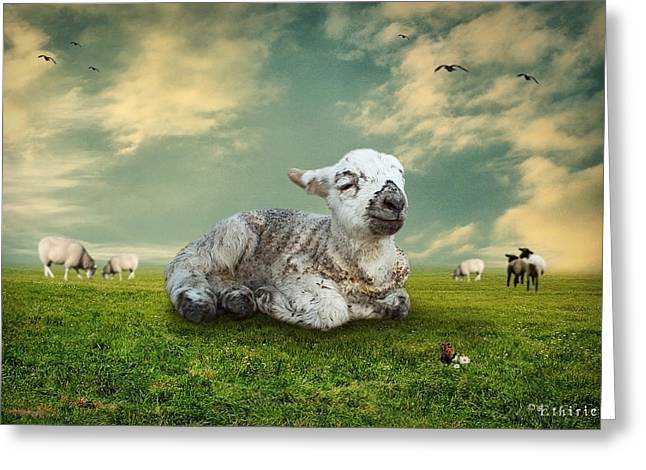 Naivety Greeting Cards - The Lamb Greeting Card by Ethiriel  Photography