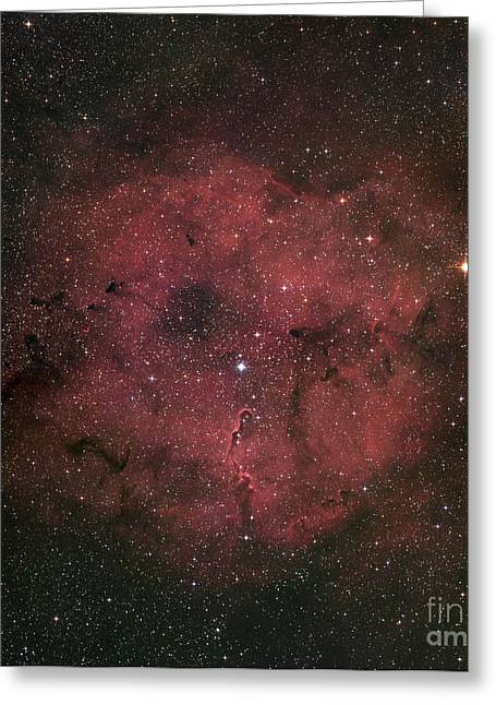 Space Dust Greeting Cards - The Large Ic 1396 Emission Nebula Greeting Card by Robert Gendler