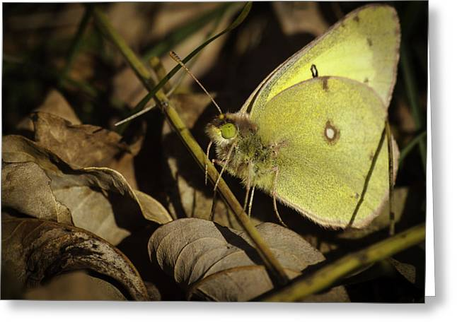 Thomas Young Photography Greeting Cards - The Last Butterfly Greeting Card by Thomas Young