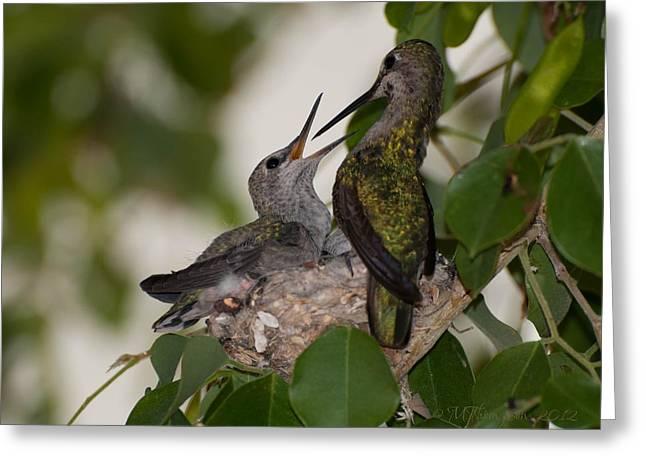 Feeding Birds Greeting Cards - The last Feeding Greeting Card by Martina Thompson